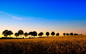 coucher du soleil, domaine, Fleurs, arbres, paysage