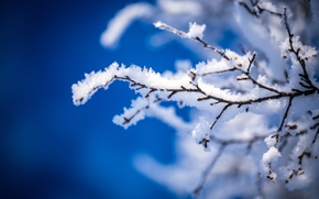 winter, branch, snow, frost