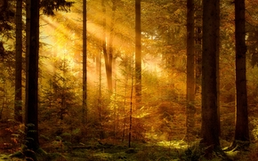 forest, trees, RAYS OF THE SUN, nature