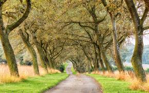 stradale, alberi, paesaggio