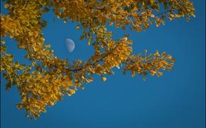 autunno, tramonto, rami di alberi, fogliame, natura