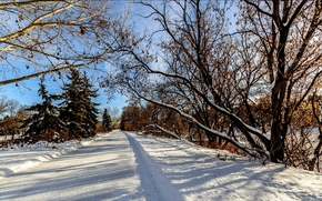 winter, trees, snow, drifts, footpath, landscape