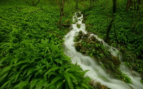 small river, forest, plants, nature