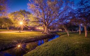 parco, piccolo fiume, alberi, luci, notte, paesaggio