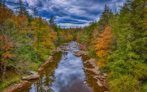 Falls State Park Black Water, West Virginia, rivière, automne, arbres, paysage