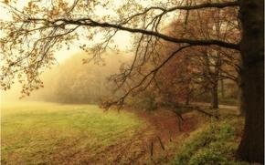 autunno, parco, nebbia, campo, alberi, stradale, paesaggio