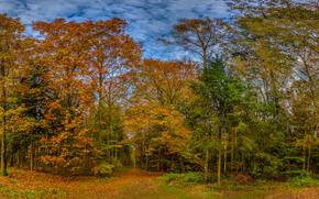autunno, foresta, stradale, alberi, paesaggio