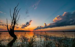 закат, озеро, дерево, пейзаж