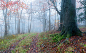 forest, road, trees, fog, nature