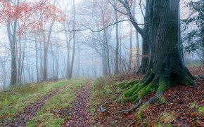 bosque, carretera, árboles, niebla, naturaleza
