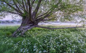 поле, цветы, дерево, пейзаж
