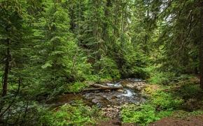 река, лес, деревья, природа
