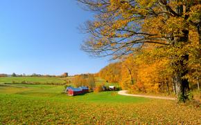 осень, поля, дорога, деревья, дома, пейзаж