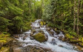 las, drzew, rzeka, wodospad, kamienie, krajobraz