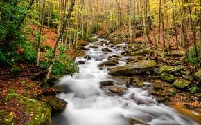 Pond Creek, Beech Mountain, Karolina Północna, jesień, rzeka, drzew, kamienie, krajobraz