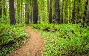 las, drzew, droga, charakter