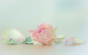 stieg, BUD, Blütenblätter, Macro