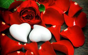 День Святого Валентина, розы, бутоны, лепестки, сердечки
