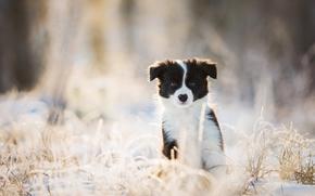 щенок, собака, взгляд, зима