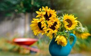 Sunflowers, pitcher, bokeh