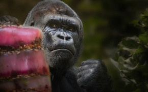 gorilla, monkey, fist