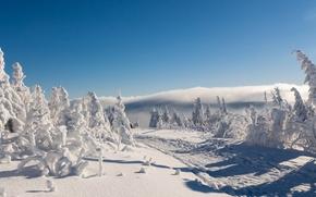 Rudawy, Saksonia, Niemcy, Rudawy, Saksonia, Niemcy, zima, śnieg, droga, drzew