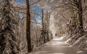 zima, las, droga, drzew, krajobraz