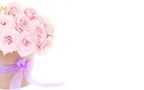 通过Kisenok角色, 玫瑰, 粉红色, 花卉, 花束, 组成, 白色背景