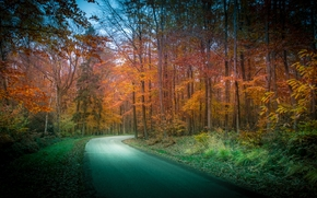 jesień, droga, las, drzew, krajobraz