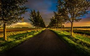 pôr do sol, campo, estrada, árvores, paisagem