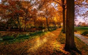 jesień, park, droga, drzew, krajobraz