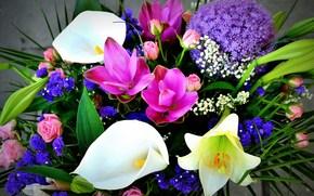 bouquet, Fleurs, flore