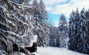 zima, śnieg, drzew, kabina, krajobraz