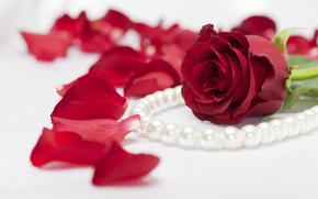 Valentine, Valentine's Day, holiday