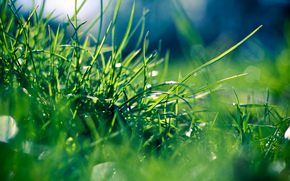 hierba, rocío, Macro