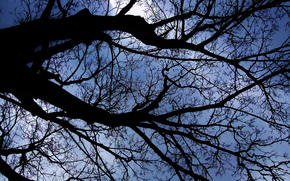 sky, tree, BRANCH, nature