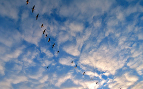 sky, clouds, birds, Cranes, nature