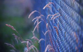 трава, забор, сетка, макро