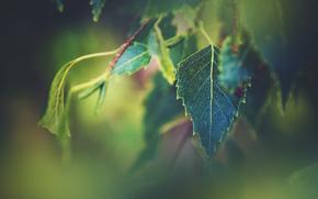 BRANCH, foliage, Macro