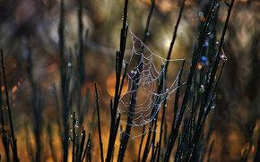BRANCH, web, Macro
