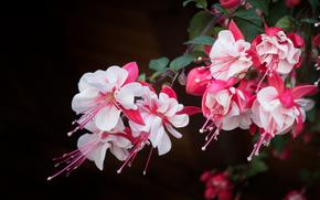 цветы, растение, флора
