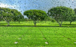 glass, drops, field, trees