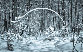 winter, forest, trees, drifts, nature
