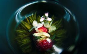 орхидея, цветок, стеклянная ваза