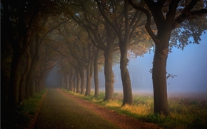 forêt, route, arbres, paysage