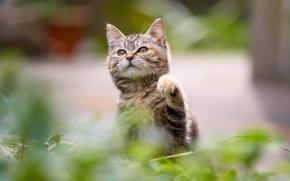 kitten, baby, Foot
