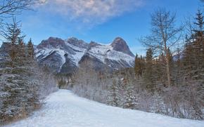hiver, Montagnes, route, arbres, paysage
