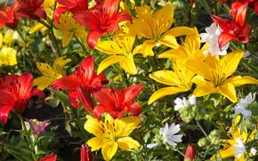 Flori, Crini, floră