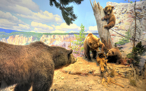 Bears, brown, animals