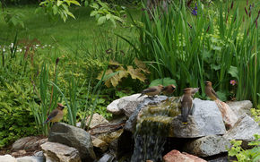 stones, waterfall, plants, birds, nature